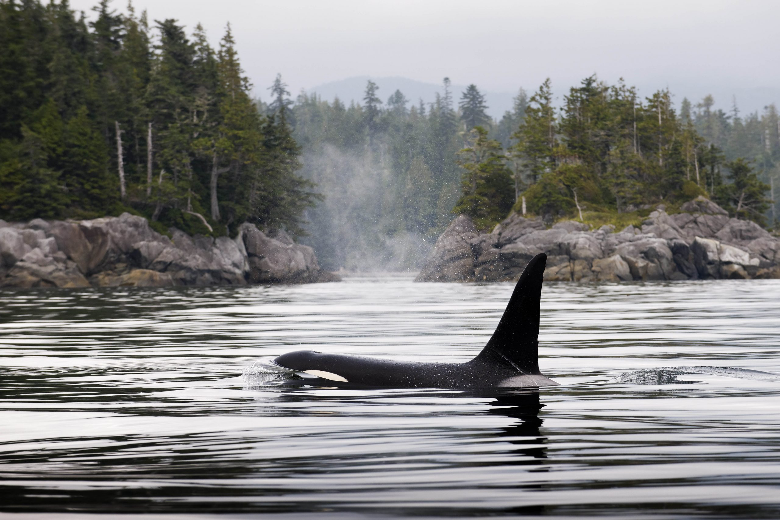 Orca_Andy Wright