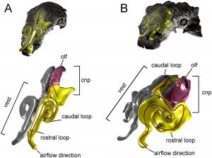 PLOS ONE ankylosaur nasal passages