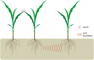 PLOS ONE plant communication