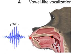 PLOS ONE: Evidence of Pre-Hominin Speech Precursors in Baboon