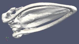 fourth (whale)
